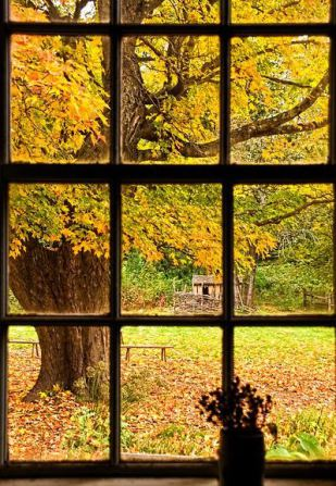 fall-view-through-a-window