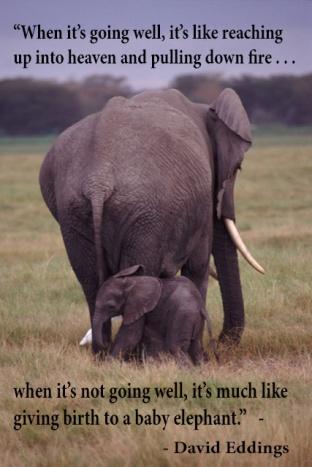 baby elephant quote