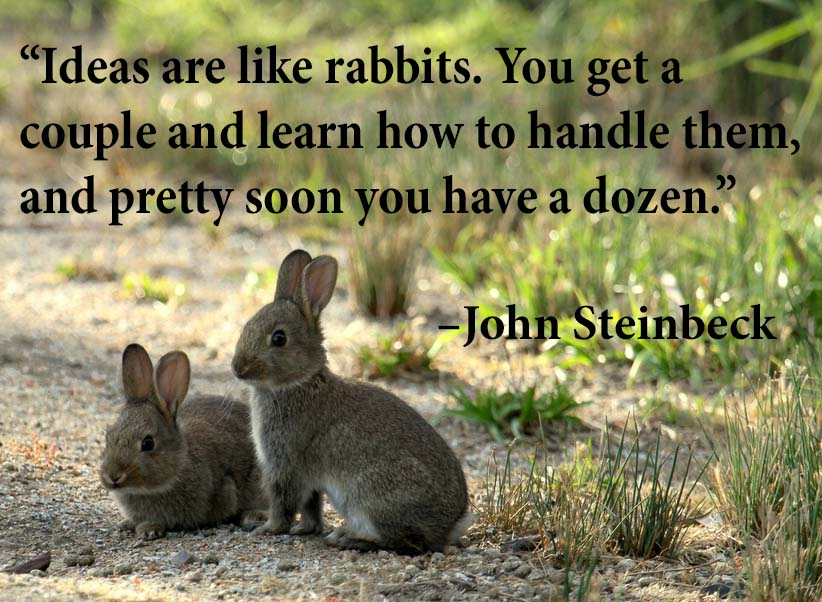 Quotes About Rabbits: Three Quotes Challenge – Day 3
