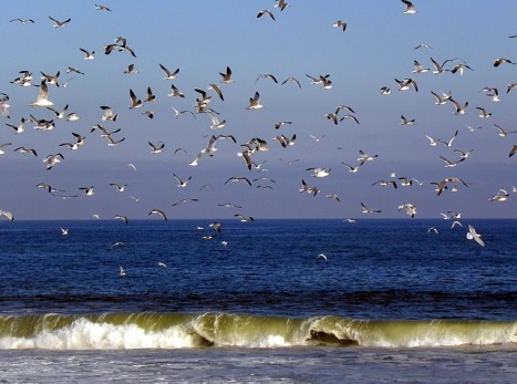 birds-173695_640