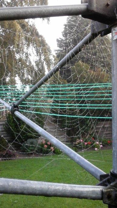 004 Spiders' webs 2