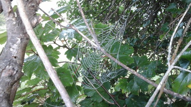 008 Spider' webs 1