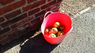 Kind offerings - which are all over the village. Everyone seems to have fruit trees.