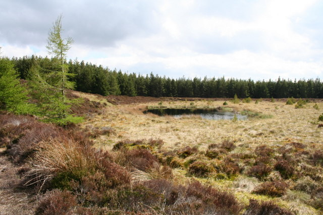 Diminutive Fir Loch. geograph.org.uk. Author: Des Colhoun. Commons