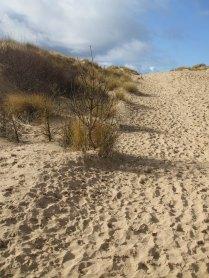 031 Sand Dune