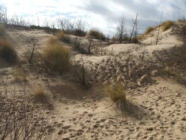 032 Sand Dune
