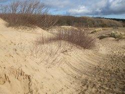 033 Sand Dune