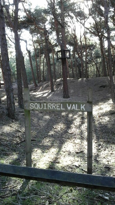 100 Squirrel Walk