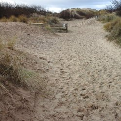 129 Path through the dunes