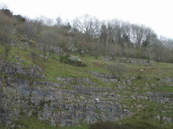 Cheddar Gorge Goats 1