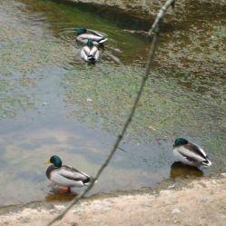 Ponds 3