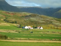 Isolated farms and houses are a feature across the open land. Left to roam free, the sheep feed on the grasses and herbs, which give Icelandic lamb its ditsinctive flavour.