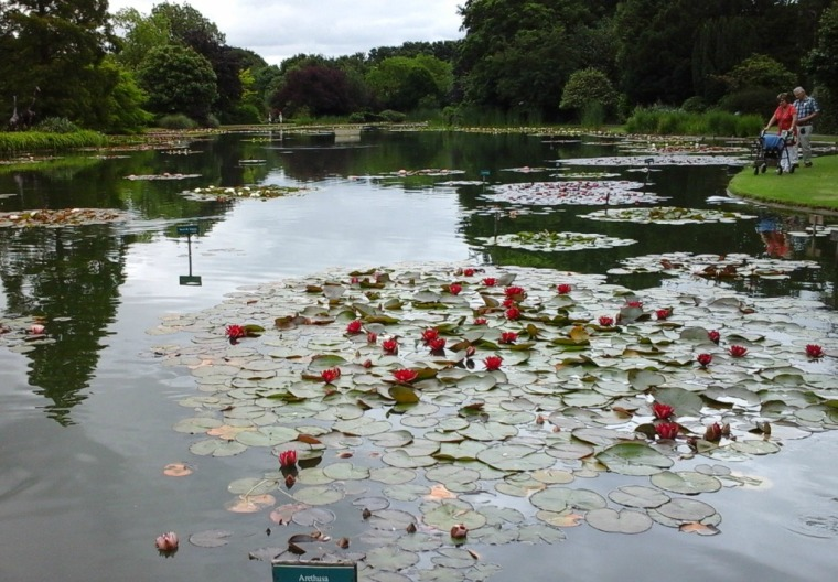 lake-and-water-lilies-3-july
