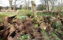 stumpery-1-april