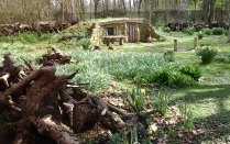 stumpery-3-april