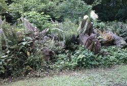 stumpery-3-july