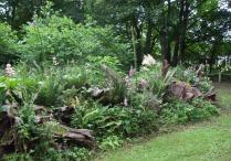 stumpery-4-july