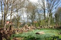 stumpery-6