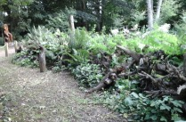 stumpery-9-burnby-july