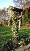ivy-growing-up-the-bird-table