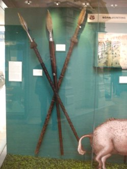 Spears used in boar hunting