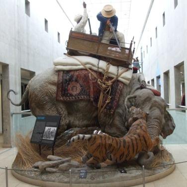 Tiger hunting - India