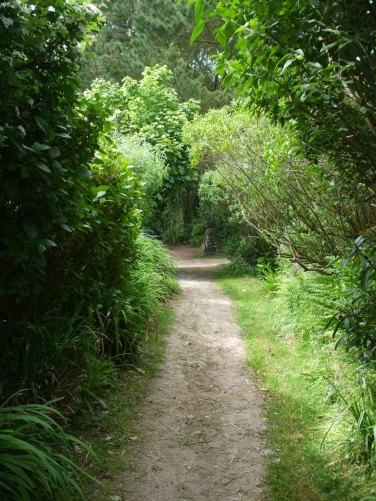lane-back-from-carn-euny