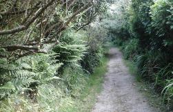lane-on-the-way-to-carn-euny-village-2