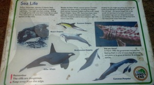 sea-life-poster-at-lands-end
