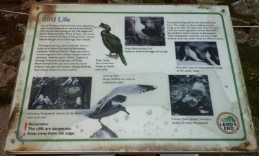 worse-for-wear-information-about-bird-life-at-lands-end