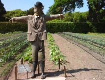 A scarecrow called Diggory in the kitchen garden doing his job in the vegetable plots