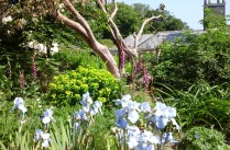 Flower Garden at Heligan