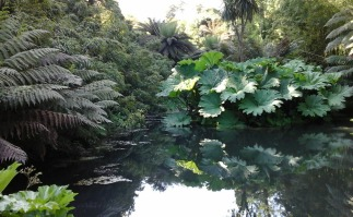 Pond in the jungle