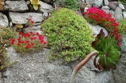 Terrace garden 8