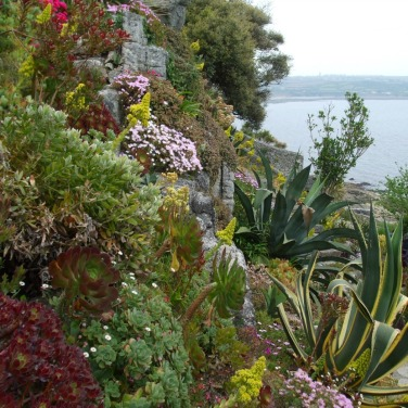Terrace gardens 6