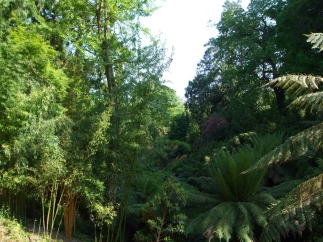 The Jungle area
