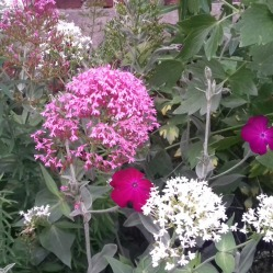 Garden close-up 3
