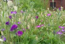 Garden close-up 4