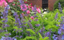 Garden close-up 5