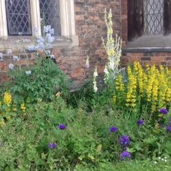 Gardens close-up 7