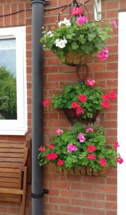 Geranium hanging baskets by the back door