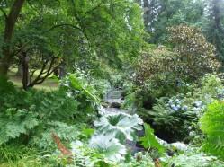 Along the stream bank