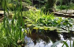 Garden 33