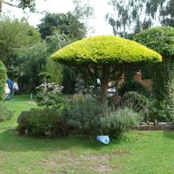 Japenese Garden 4