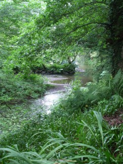 Looking down at the stream while sheltering under the trees