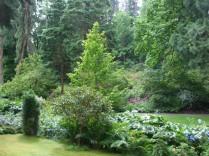 Trees at Bodnant 1
