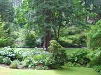 Trees at Bodnant 2