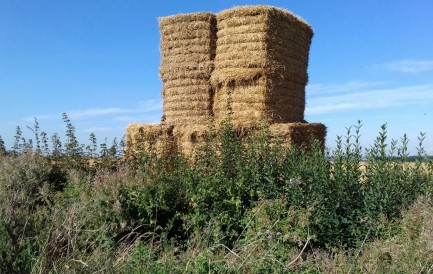 Bales of straw after harveat