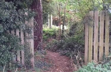 Fading woodland