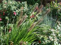 Garden plants 2